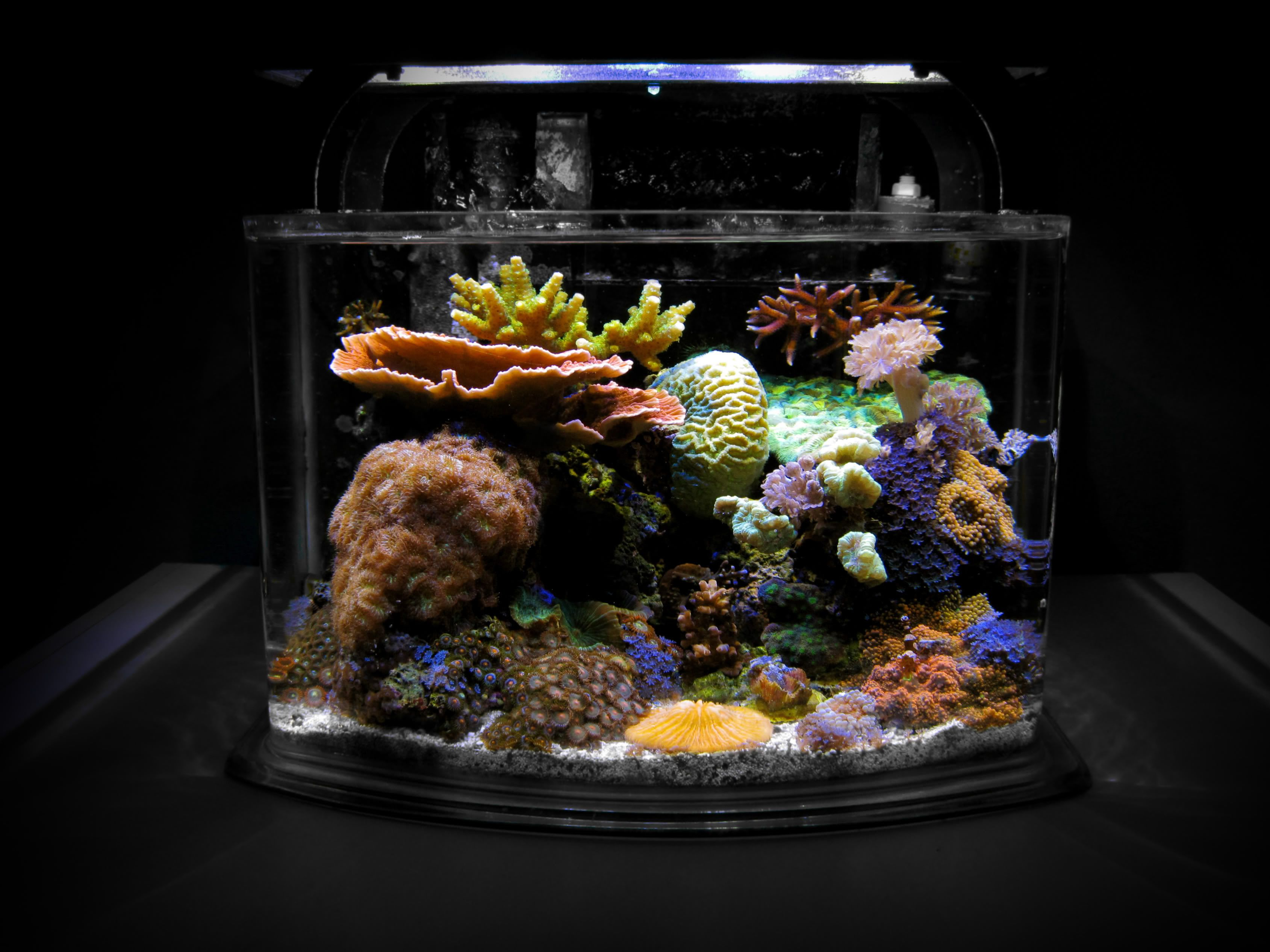 aquascaping a soft coral nano reef Google Search