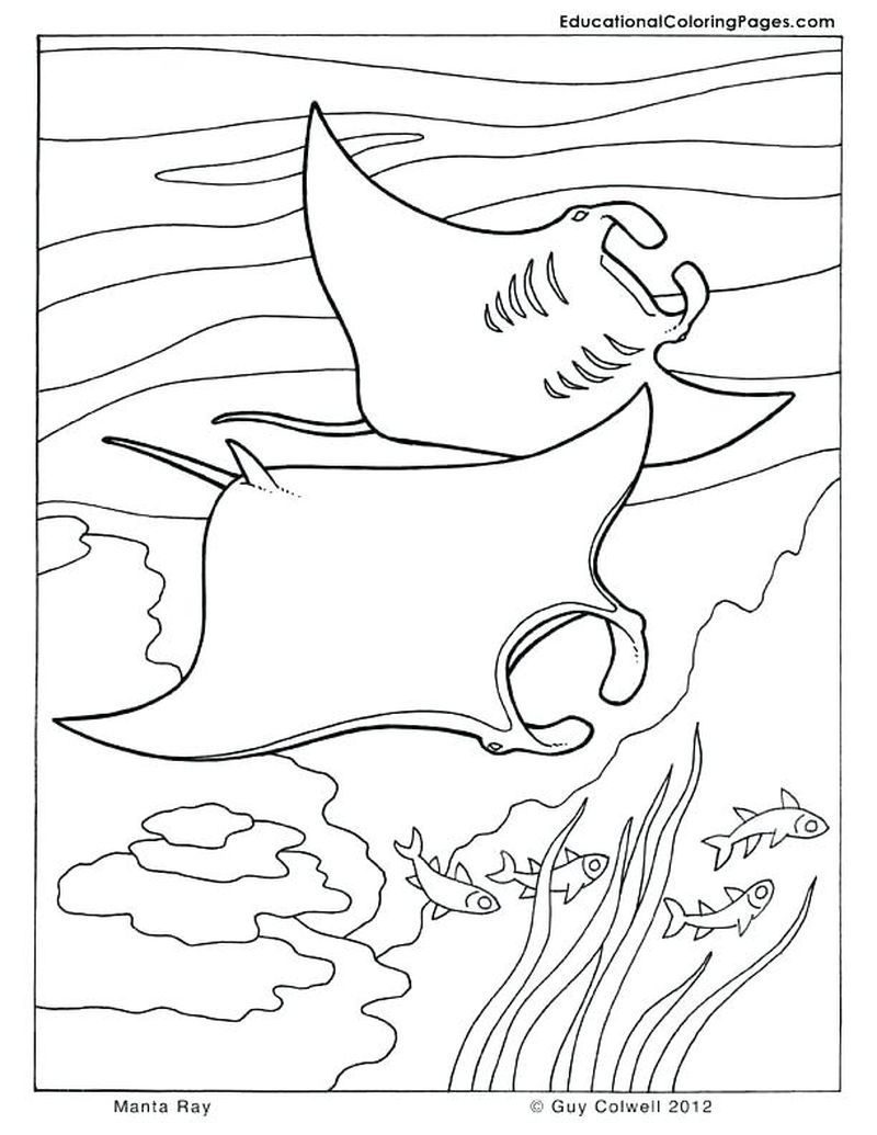 Ocean Scenes Coloring Pages Dolphin Coloring Pages Ocean Coloring Pages Animal Coloring Pages