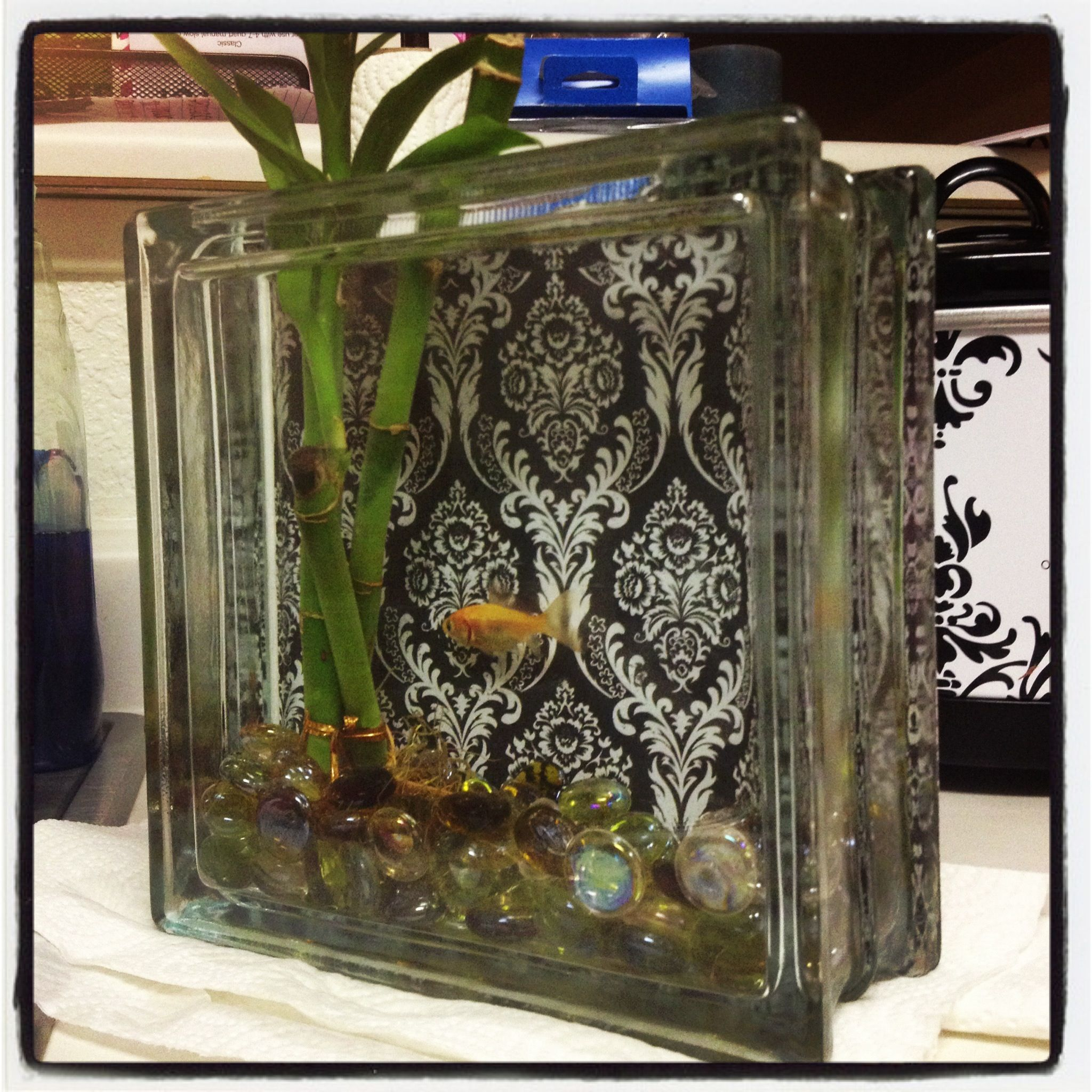 Super cute fish tank i made w a glass block at craft for Cute fish tanks