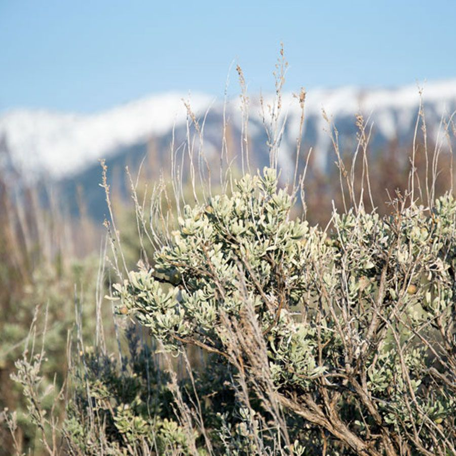Sagebrush and mountains in Wyoming Forest garden, Farm