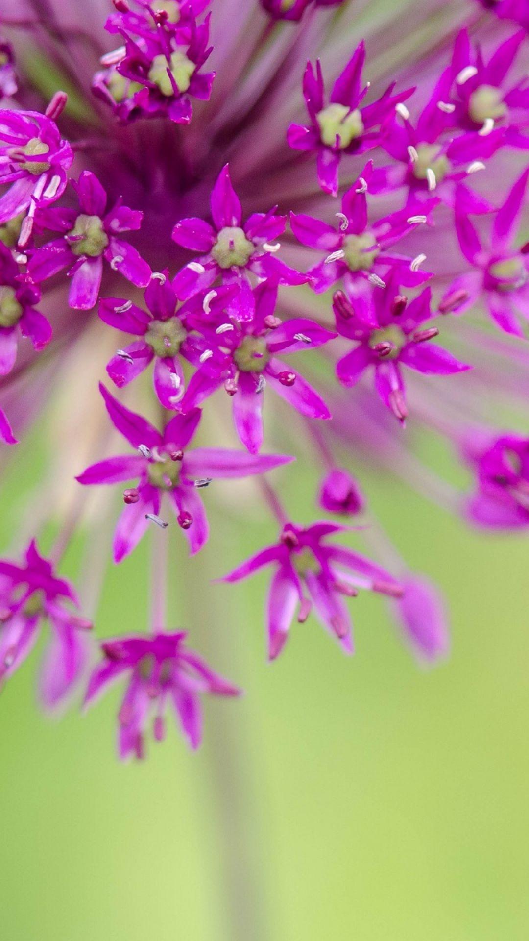 flower, petals, macro, blurring