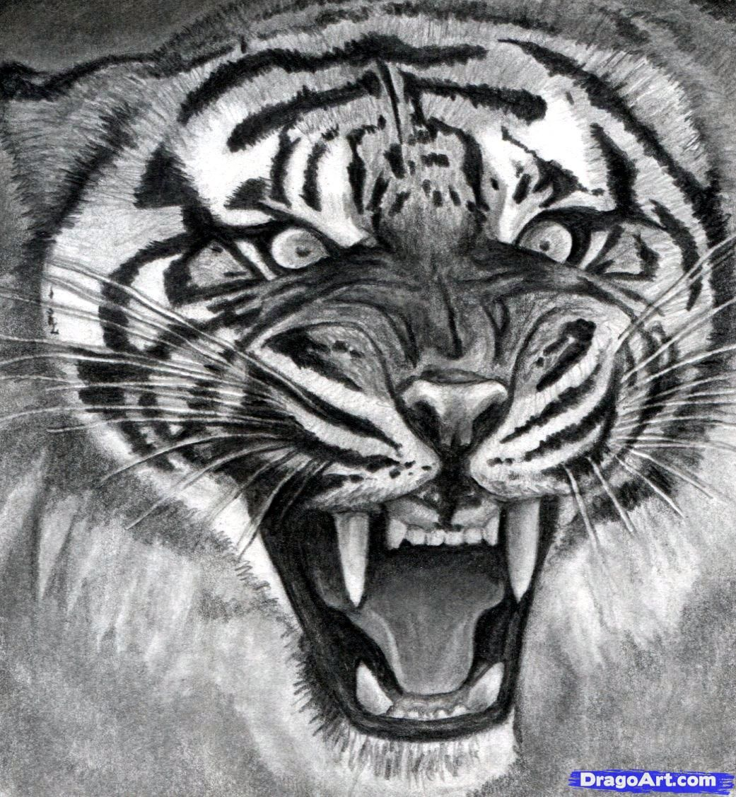 how to draw a roaring tiger step 17 | Artsy | Pinterest ...