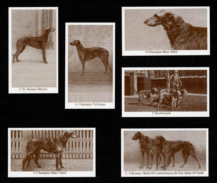 Scottish Deerhound Dogs Of Yesteryear Set Of 6 Named Dog Photo Trade Cards Scottish Deerhound Deerhound Dog Photos