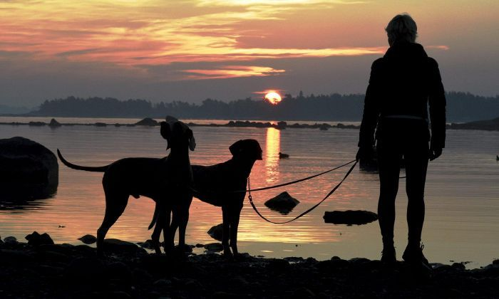 Laaja tutkimus: Koira perheessä suojaa astmalta - HS