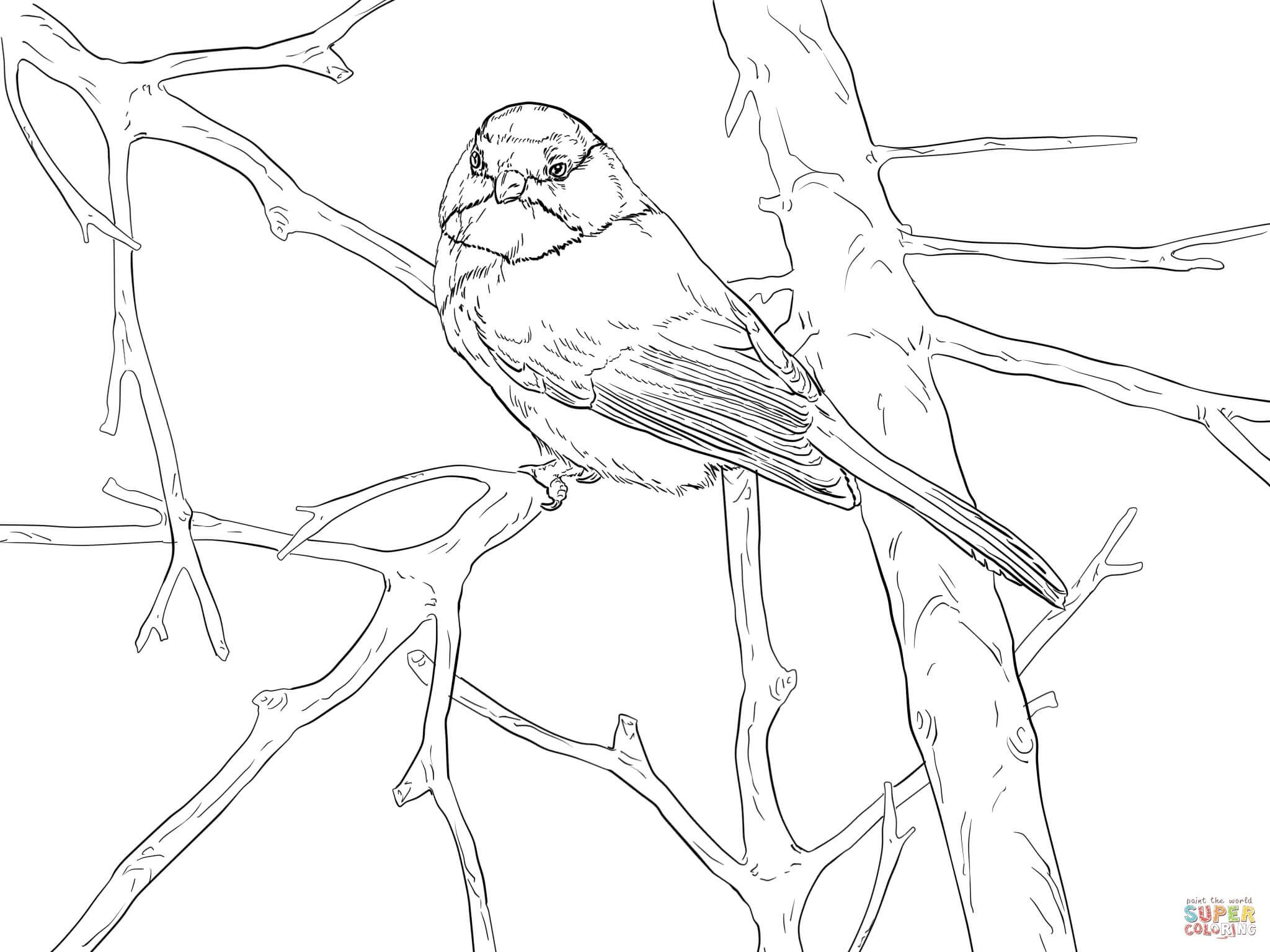 Chickadee Coloring Pages Printable Black Capped Chickadee Chickadee Drawing Chickadee
