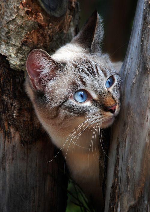 Quiero un gatito!! Photo by shcherbyk