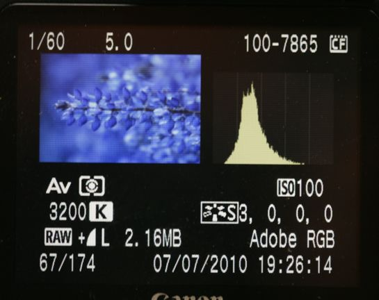 Why You Shouldnt Trust Your Camera LCD | Pro Nature Photographer