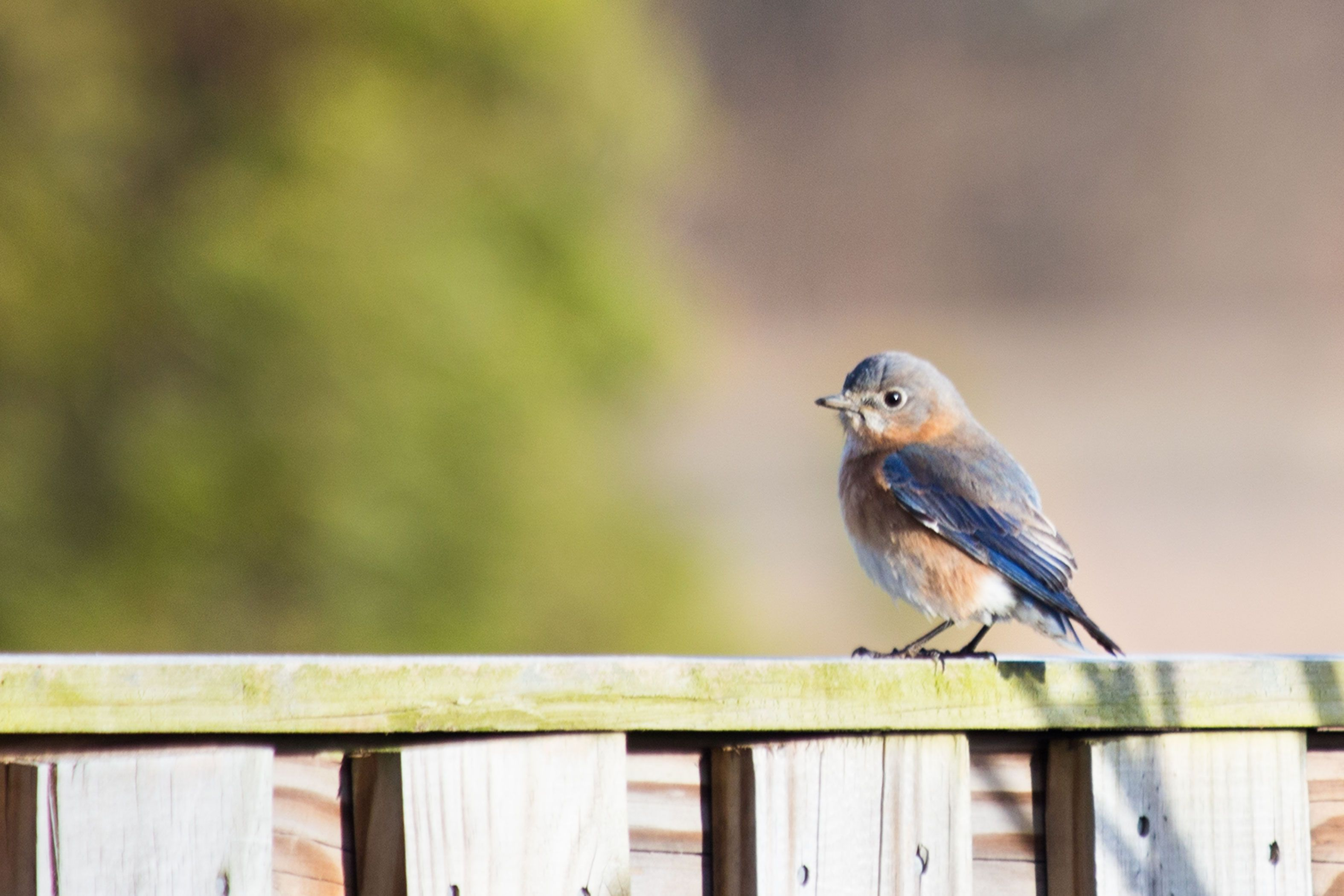 How To Get Rid Of Birds Near Your Home Birds, Keep birds