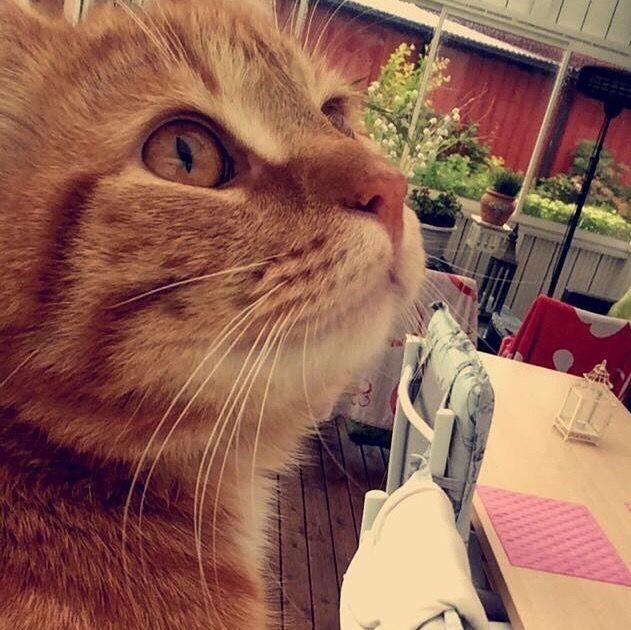 "Vivianne Hintz on Twitter: ""Our beloved cat,little ❤️ troublemaker,LEOPOLD❤️ cuddly toy https://t.co/azMa0Pk0ww"""