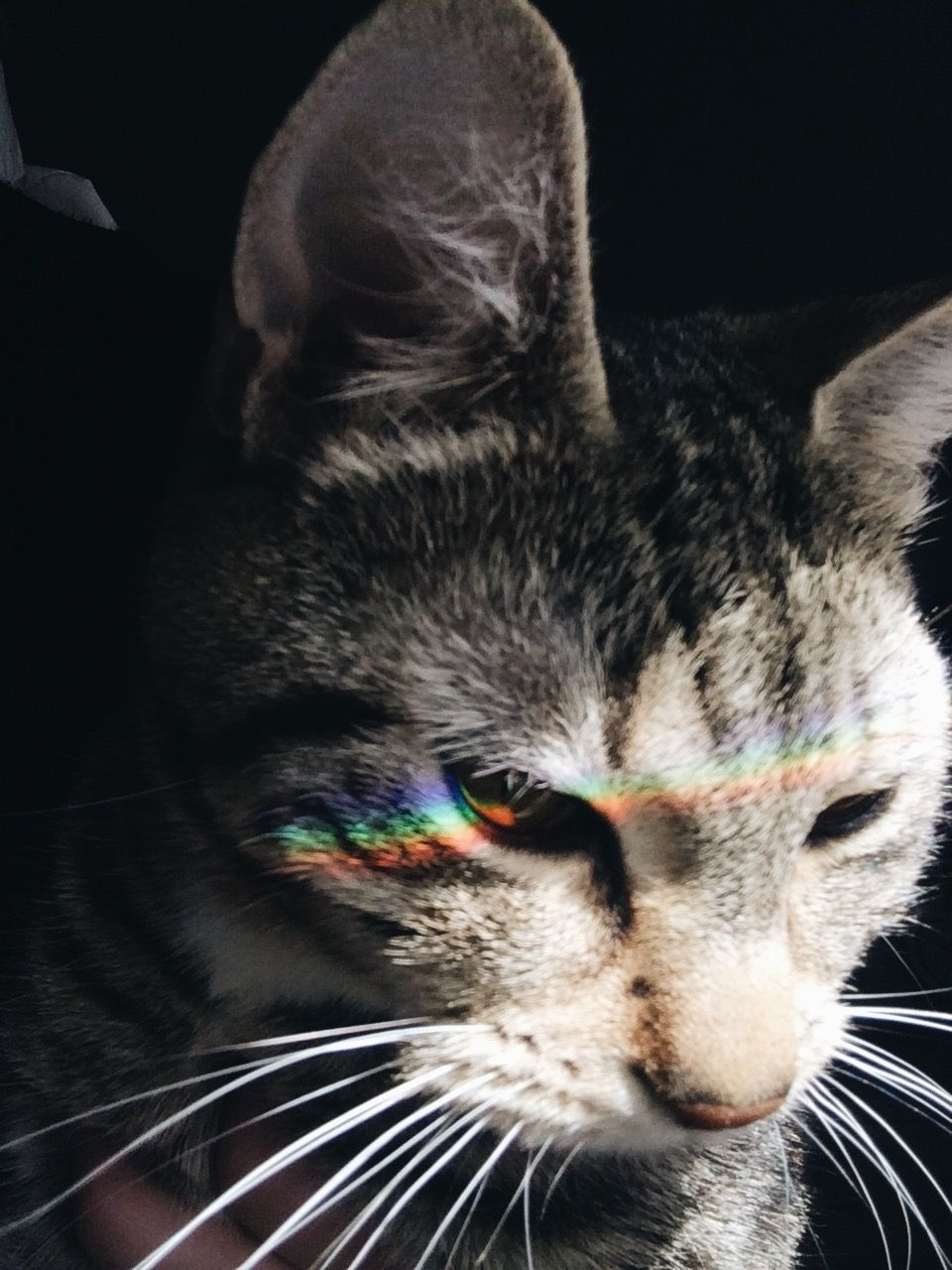 65caba08f cats, cute, tumblr, aesthetic #CatTumblr Cat Aesthetic, Rainbow Aesthetic,  Aesthetic
