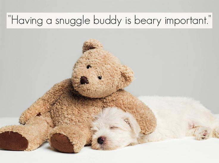 Having a snuggle buddy is beary important.  www.gracetheday.com