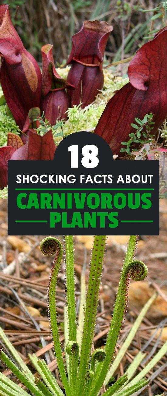 Pin on {Vegetable Gardening Tips}