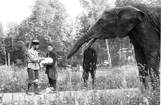 A Família Romanov manteve elefantes no parque do Palácio
