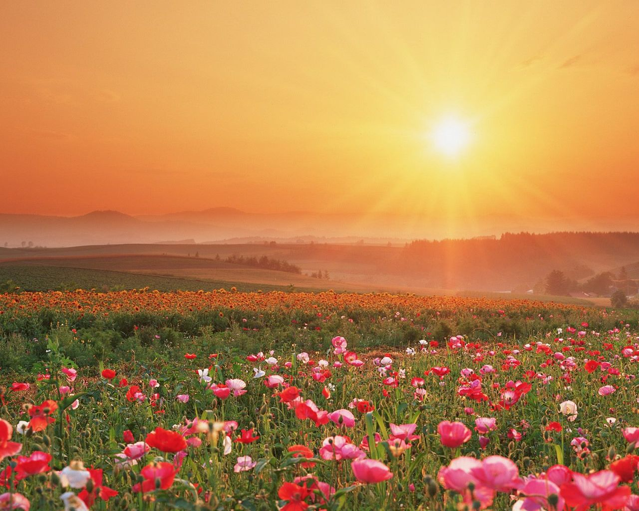 images of fields of flowers Google Search