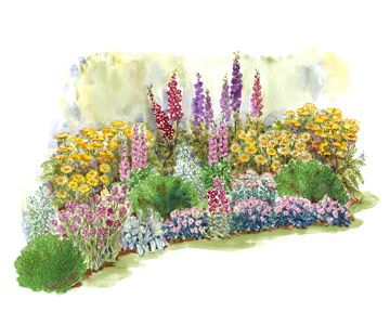 Summer Cottage Garden Plan Stately Delphiniums Are The Backbone Of This  Colorful Cottage Garden Plan.