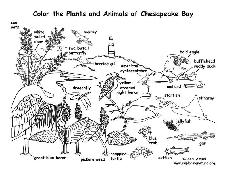 Image result for Estuary coloring sheet Biomes