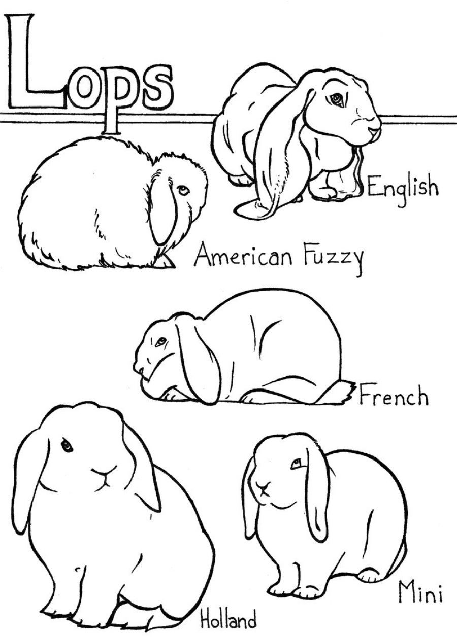 rabbit coloring pages print out u0026 share this printable lop