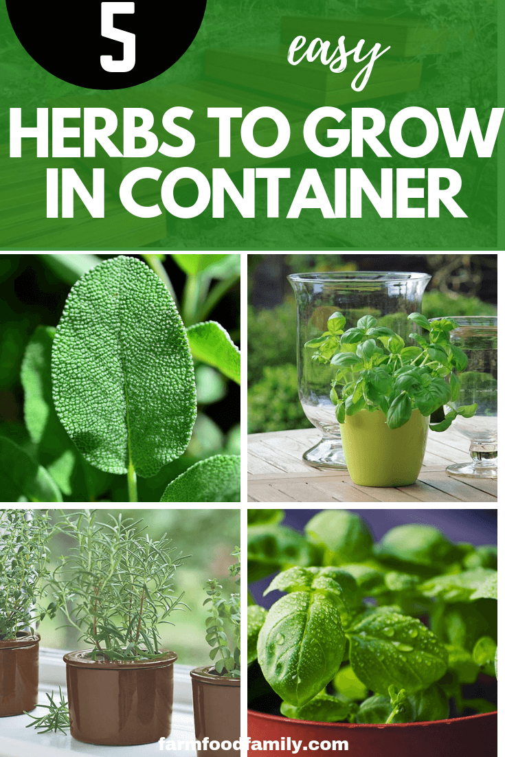 5 Easy Herbs To Grow In A Container Garden Hassle Free 400 x 300