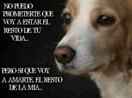 Resultado De Imagen Para Perros Frases Amor Perros Frases