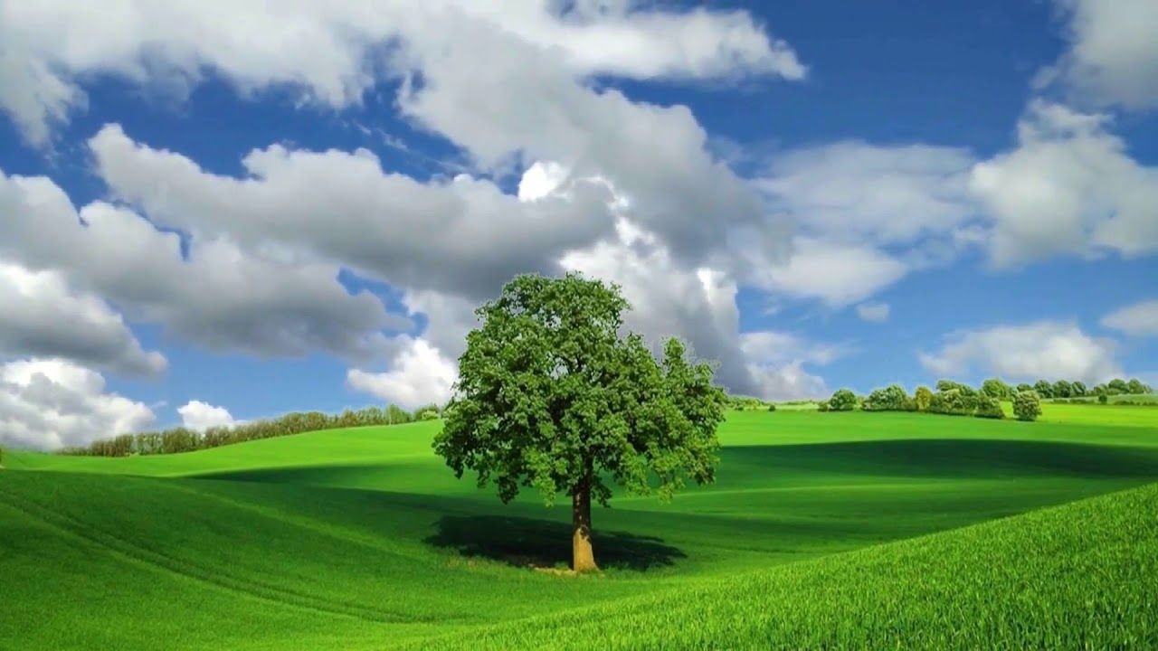 Natural Beauty with Tree, Landscape Background Video 846