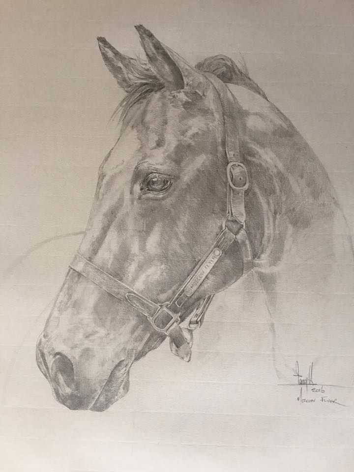 Tony O\'Connor Equine Art \'Moscow Flyer\' Graphite on Ingres paper ...