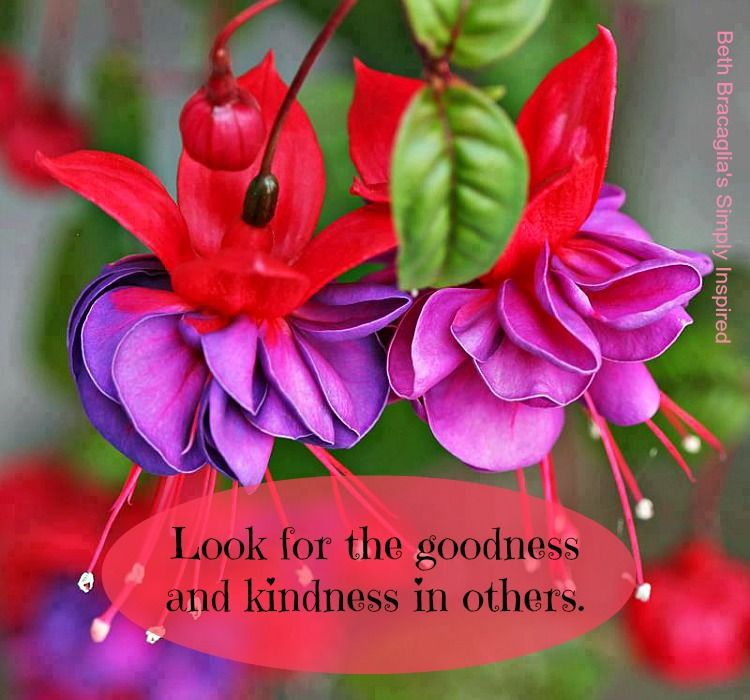 Always look for the goodness and kindness  #bethbracagliassimplyinspired on #facebook #dailyinspiration #inspiredlife #goodness #kindness