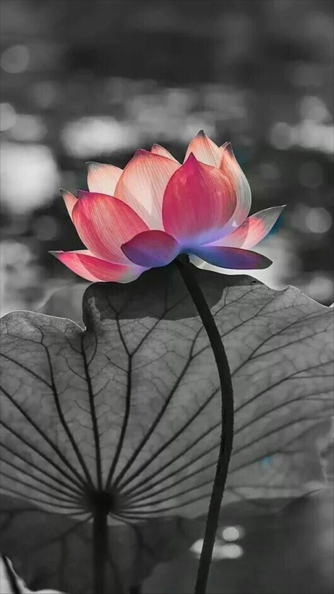 Pin By Kimberly Lindsey On Tattoos Pinterest Lotus Water Lilies