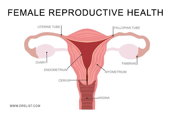 Female Reproductive Health Healthy Female Reproductive -4863