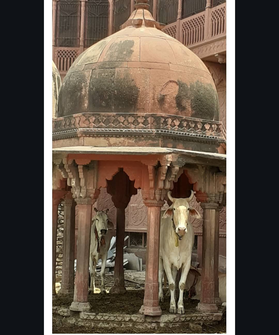 Holy Cow P Such A Poser Stunning Models On The Banks Of Yamuna