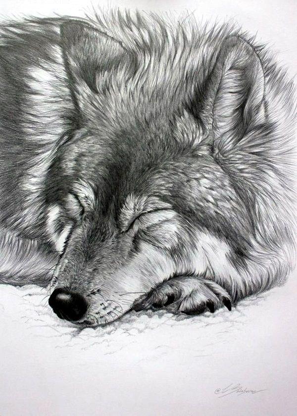 40 Realistic Animal Pencil Drawings Wolf Zeichnungen Und Zeichnen