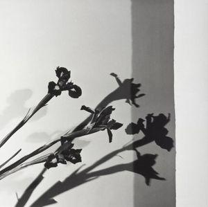 Robert Mapplethorpe, Irises, N.Y.C. 1977.