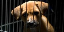 Move Forward With Animal Cruelty Registry & Protect Kansas Animals