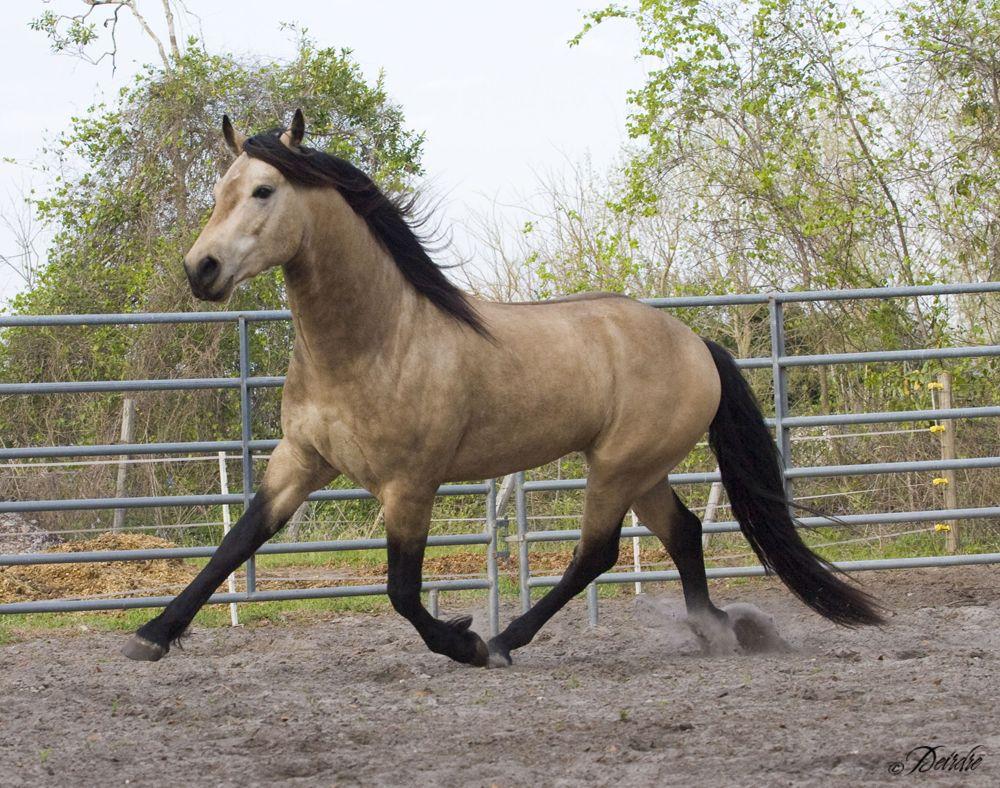 Buckskin/Yellow Horses : reddeadredemption