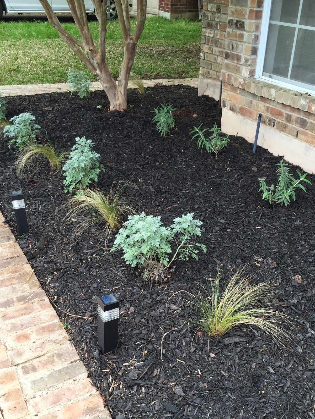 central texas front yard garden using black hardwood mulch and
