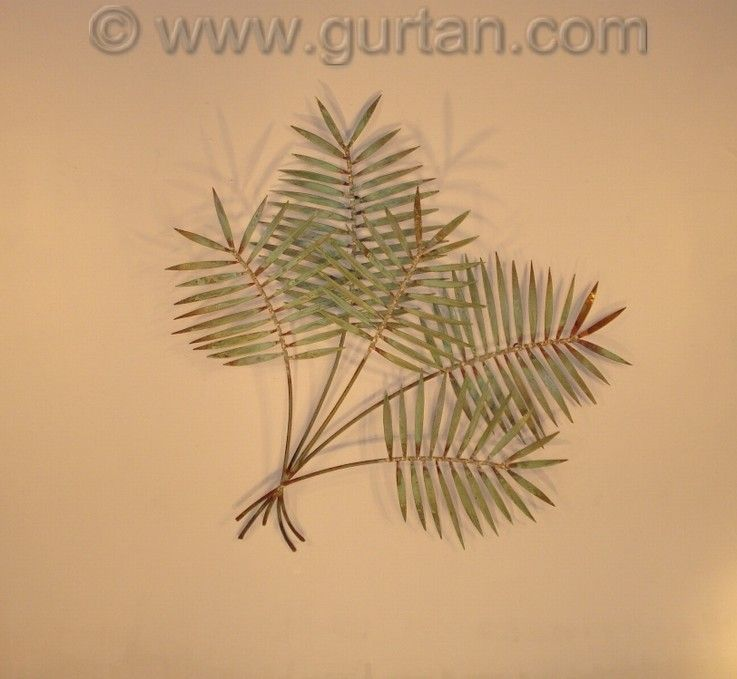 Palm Branch Copper Outdoors Wall Art By Gurtan Metal Decor Sculptures Decoration With