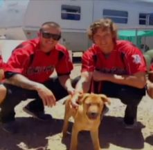Saved from the streets, the newest member of the Albuquerque Isotopes is an adopted blind dog named Stevie Wonder.