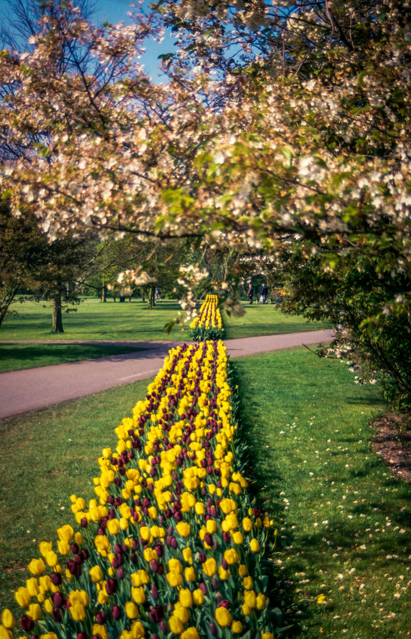A lot of tulips (Keukenhof - The Netherlands) - Photo : Renaud Cornu-Emieux