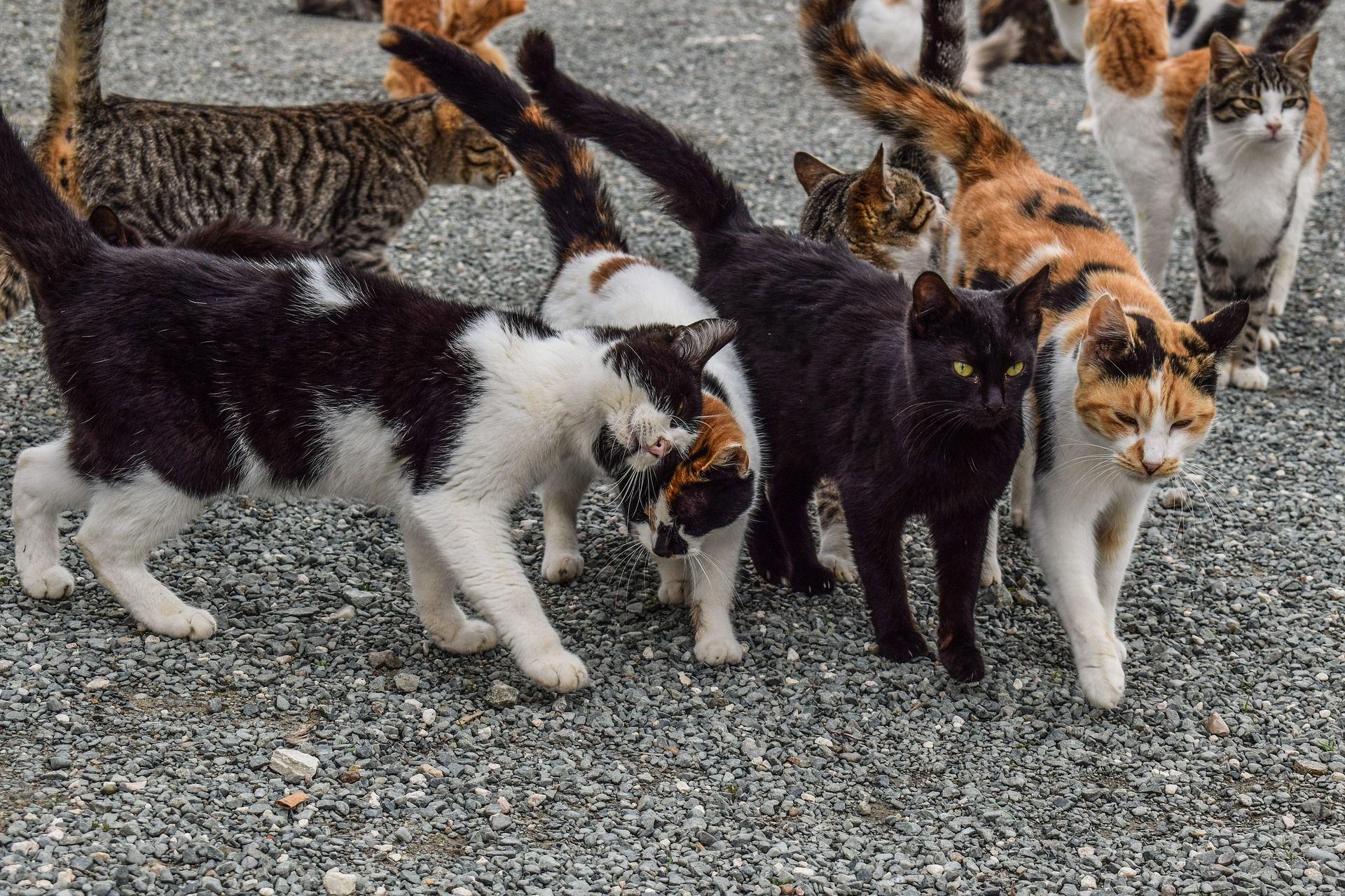 Photo by dimitrivetsikas Feral cats, Animals