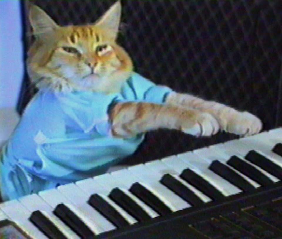 Pin By Lauren Kelly On Felines Internet Cats Cats Cat Memes