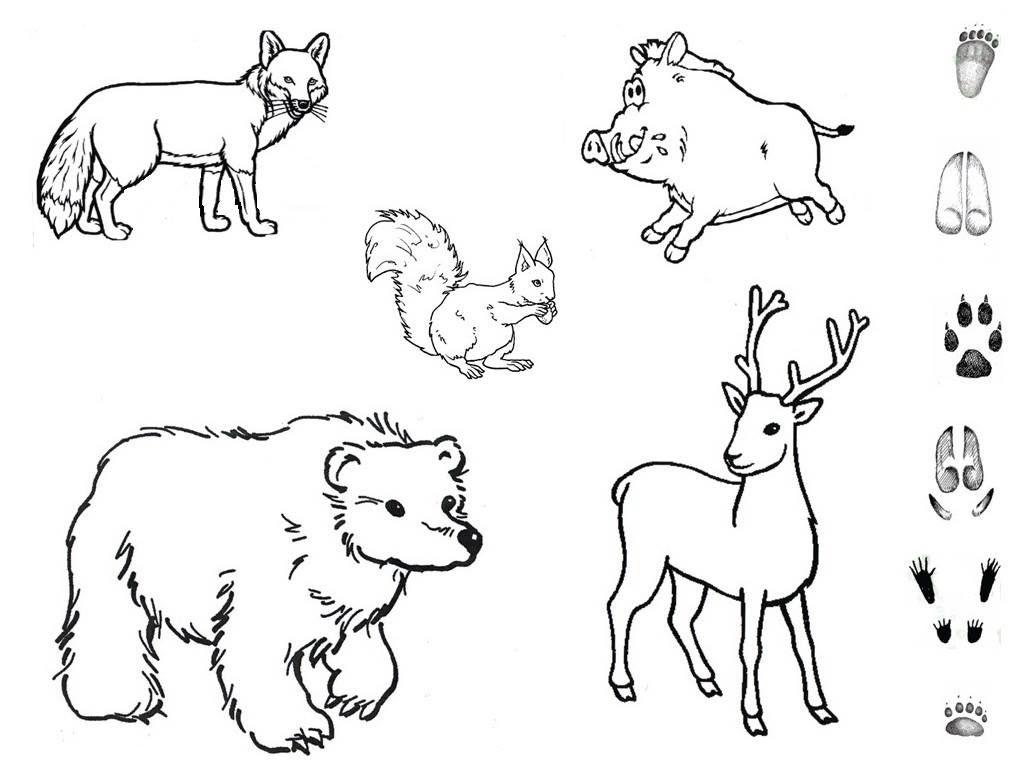 Недорисованные картинки диких животных