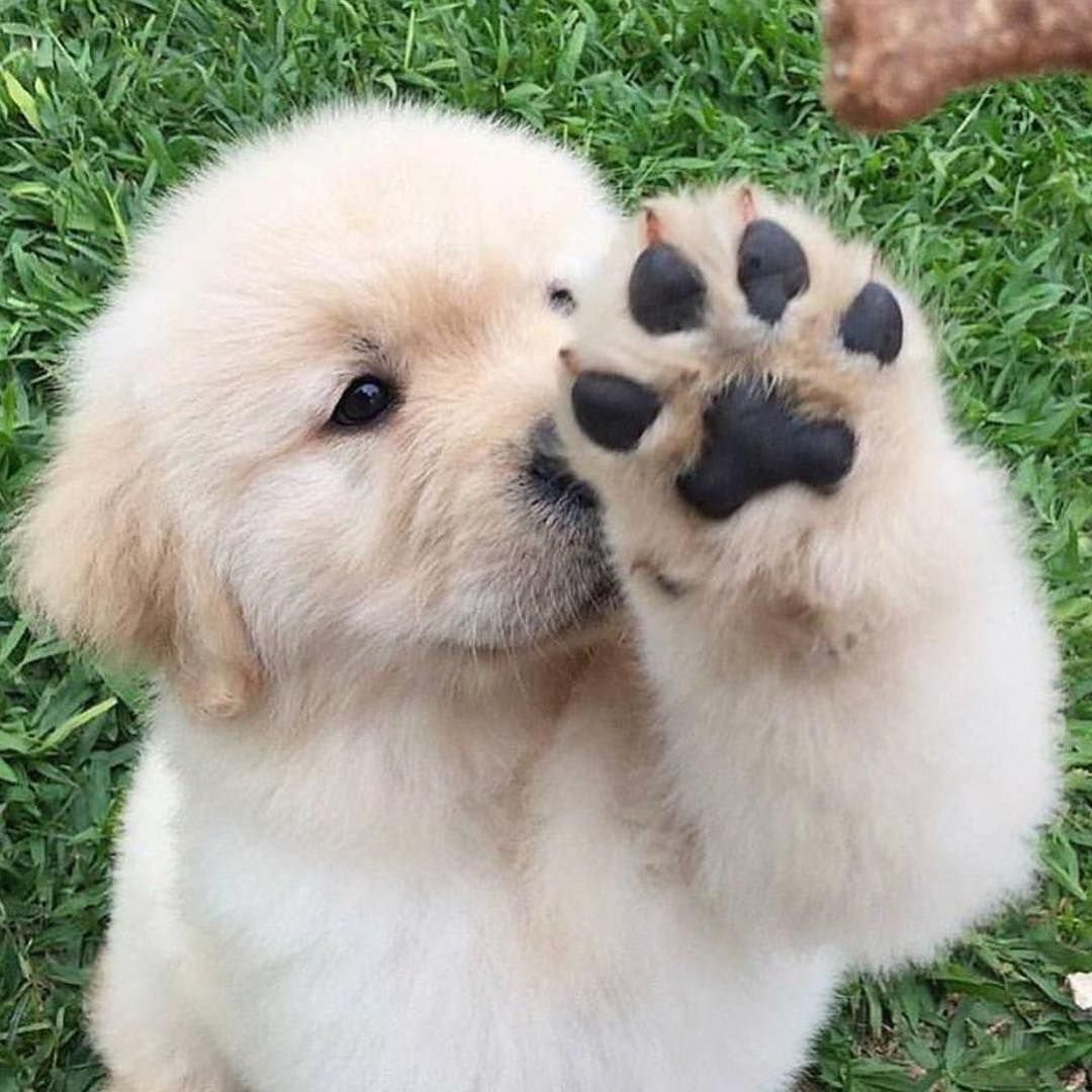 cute funnyanimals pet pets cute instagramp