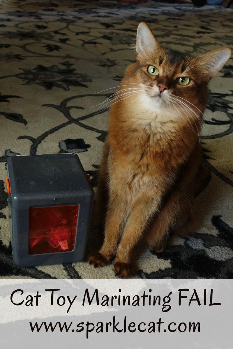Cat Toy Marinater FAIL Cat toys, Cats, Cat advice
