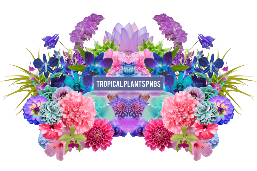 21 Free Aesthetic Png Packs Vaporwave Plant Aesthetic Png