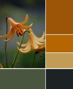 Color Combos On Pinterest Olive Green Mustard Yellow And Color