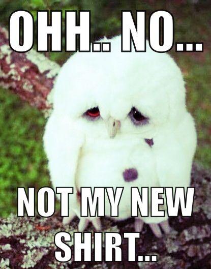 Pin By Morgan Brewington On Funny Funny Animal Memes Cute Animals Animal Memes