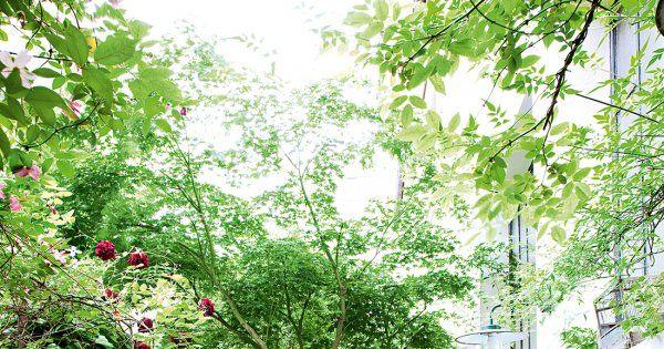 La nature et la couleur s\u0027immiscent dans la déco Jardin exotique - Jardin Japonais Chez Soi