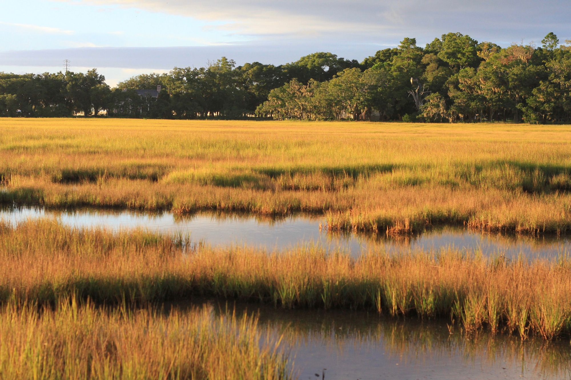 Beyond the Beach: Playing in Georgia's Salt Marshes | Coastal ...