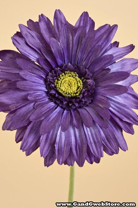 "29"" GERBERA DAISY PURPLE"