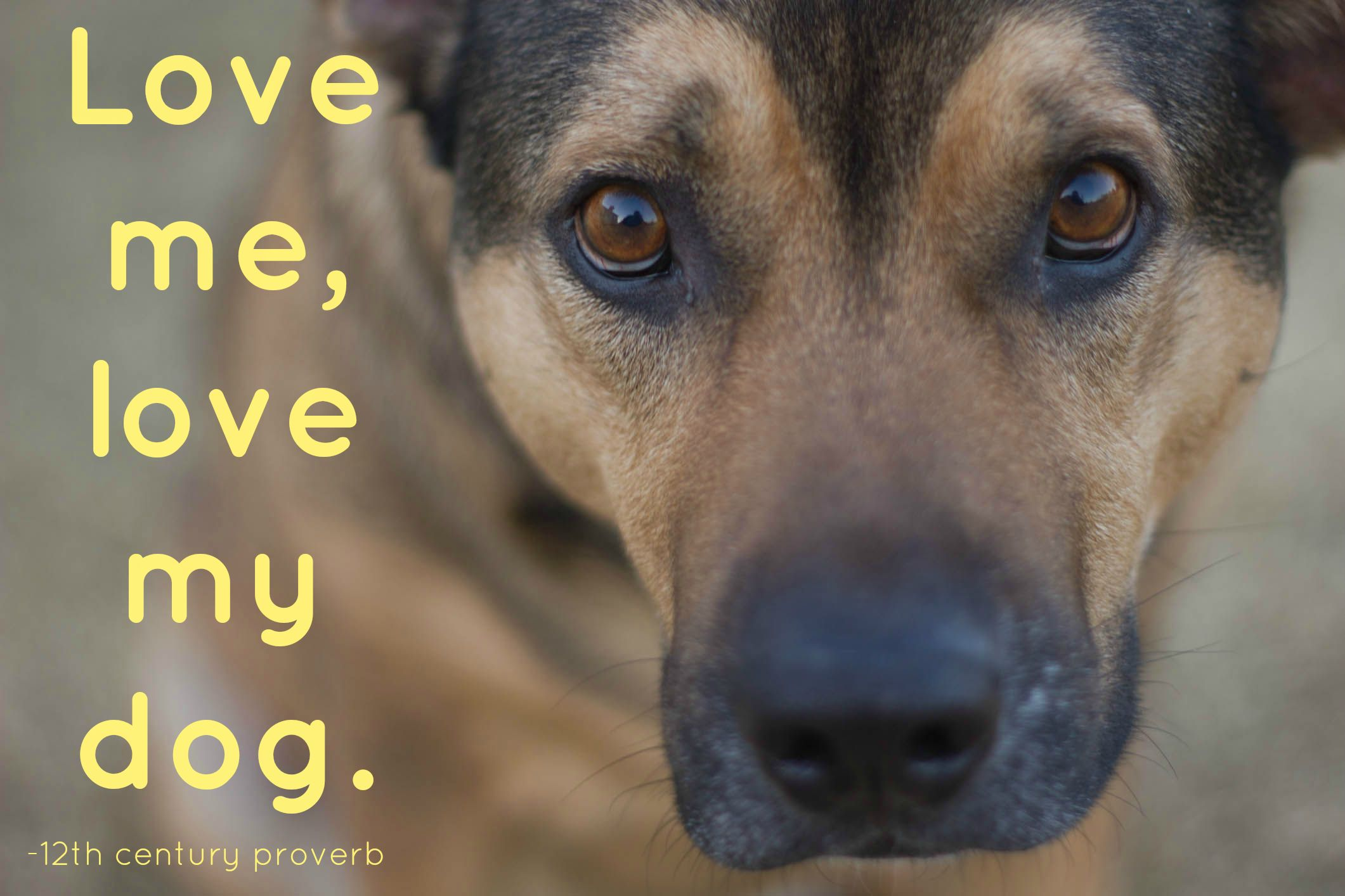 For Animal People Animal Quotes We Love Dog growling