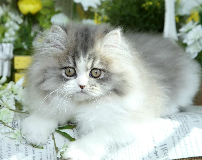 Woody Click Here Cute Cats Dogs Persian Kittens Kittens Puppies